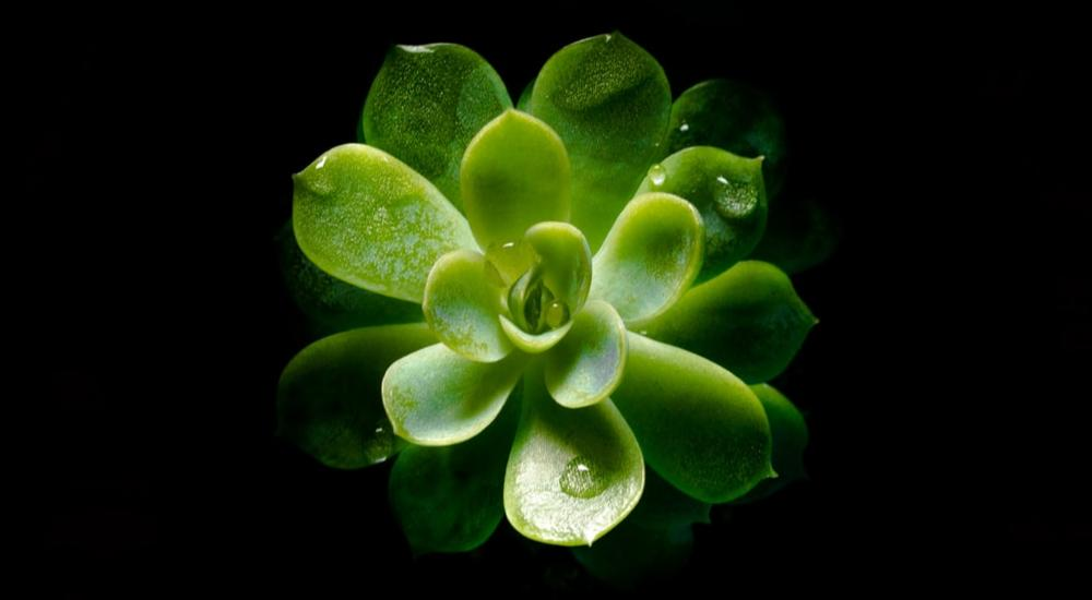 A green plant in a dark background.